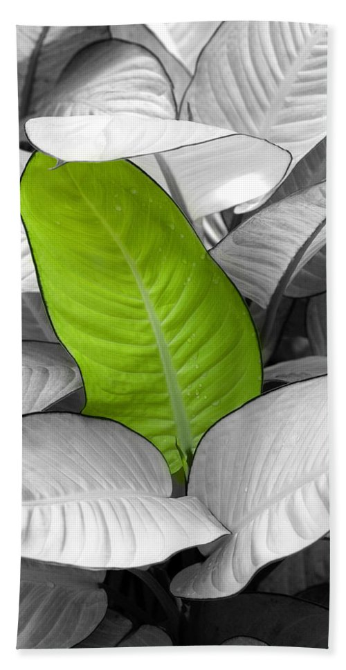 Leaf Bath Towel featuring the photograph Going Green Lighter by Marilyn Hunt