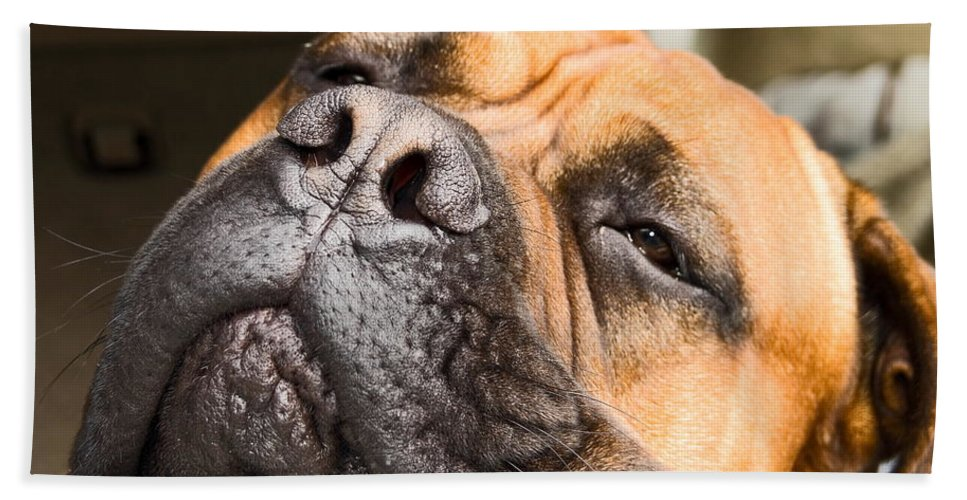 Mastif Dog Bath Sheet featuring the photograph Going To Sleep by Sally Weigand