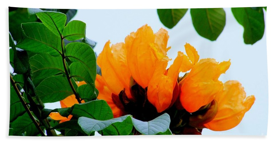 Africa Bath Sheet featuring the photograph Gold African Tulips by Mary Deal