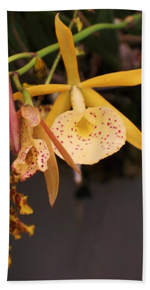 Gold Bath Sheet featuring the photograph Gold Yellow Orchid by Eric Schiabor