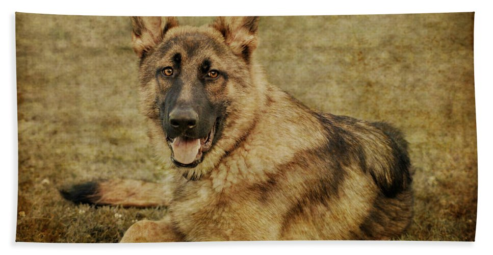 Dog Hand Towel featuring the photograph Golden Boy by Sandy Keeton