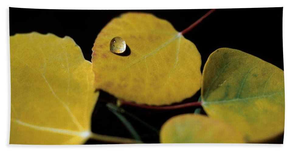 Aspen Bath Sheet featuring the photograph Golden Drop by Jerry McElroy