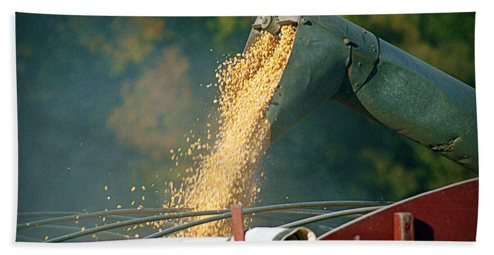 Corn Bath Sheet featuring the photograph Golden Harvest by Cricket Hackmann