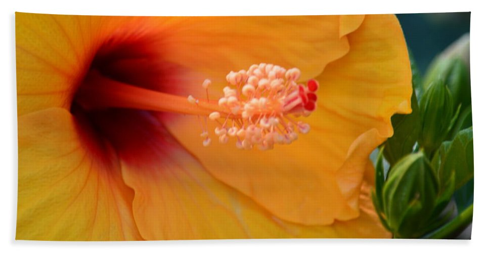 Golden Hibiscus Hand Towel featuring the photograph Golden Hibiscus by Maria Urso
