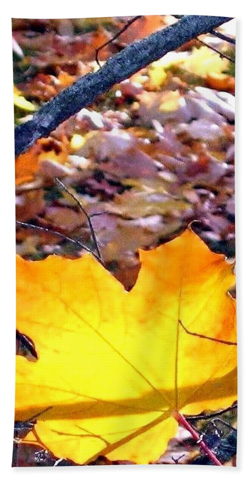 Maple Leaf Bath Towel featuring the photograph Golden Leaf by Will Borden