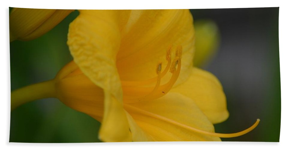 Golden Lily 18-2 Bath Sheet featuring the photograph Golden Lily 18-2 by Maria Urso