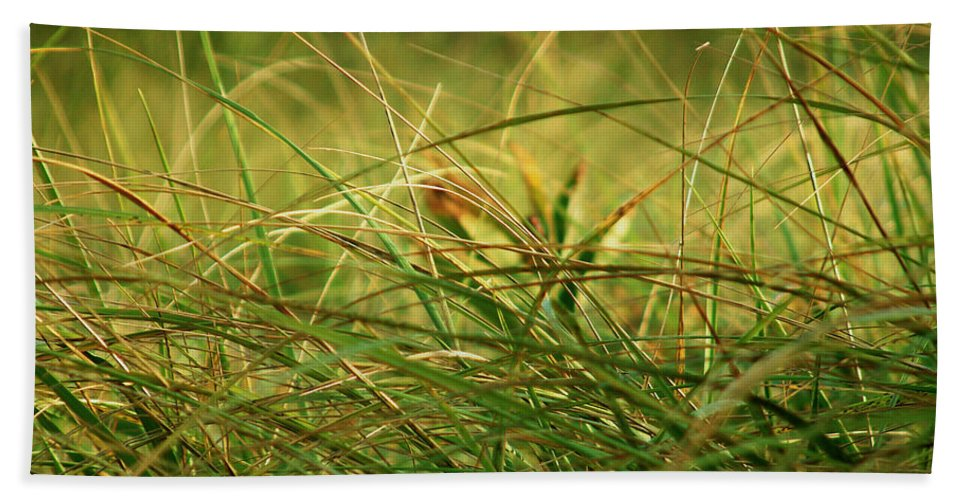 Autumn Hand Towel featuring the photograph Golden Meadow September by RC DeWinter
