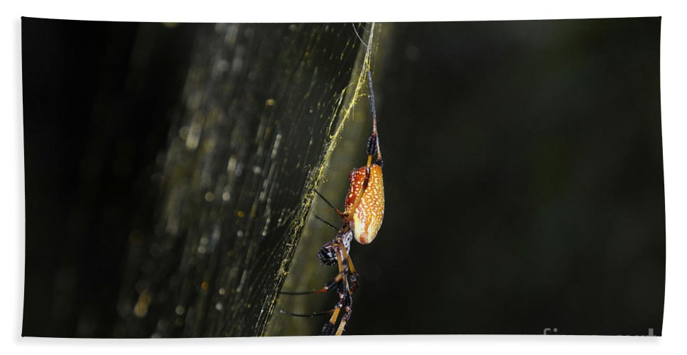 Golden Orb Spider Hand Towel featuring the photograph Golden Orb Spider by David Lee Thompson