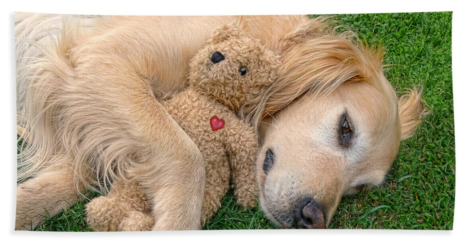 Golden Retriever Hand Towel featuring the photograph Golden Retriever Dog Teddy Bear Love by Jennie Marie Schell