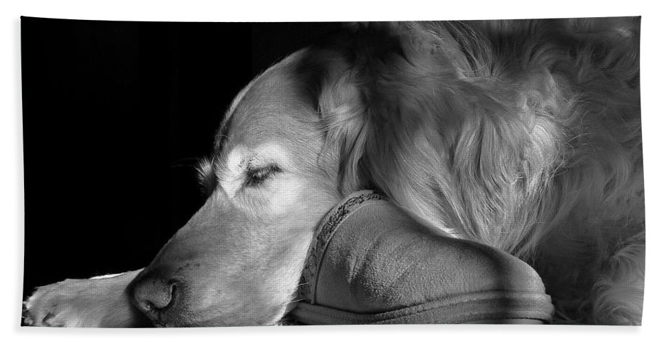 Golden Retriever Hand Towel featuring the photograph Golden Retriever Dog With Master's Slipper Black And White by Jennie Marie Schell