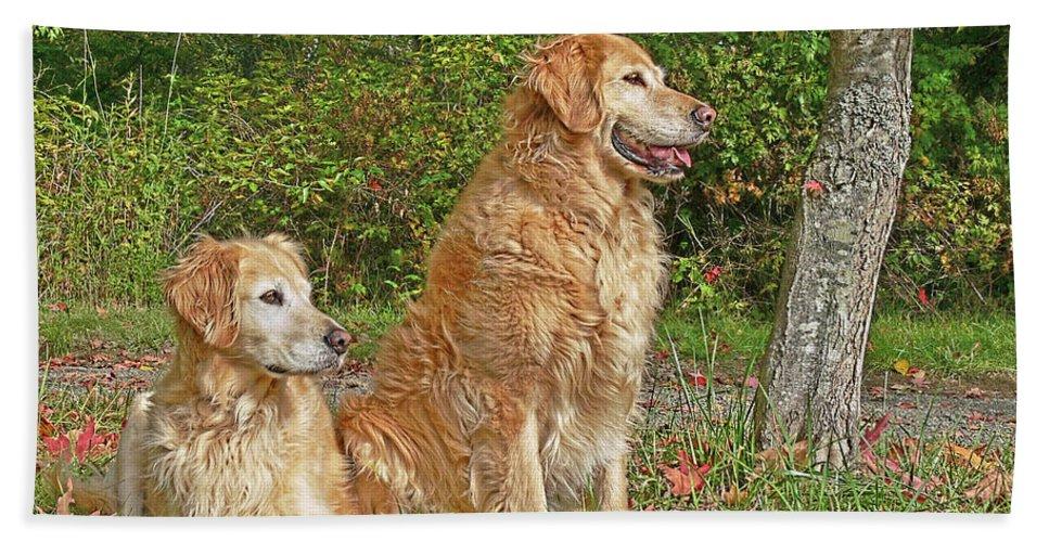 Golden Retriever Bath Sheet featuring the photograph Golden Retriever Dogs In Autumn by Jennie Marie Schell