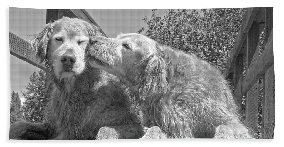 Golden Retriever Hand Towel featuring the photograph Golden Retrievers The Kiss Black And White by Jennie Marie Schell