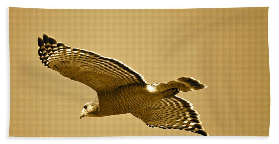 Golden Hand Towel featuring the photograph Golden Sunlight On Hawk by Carol Groenen