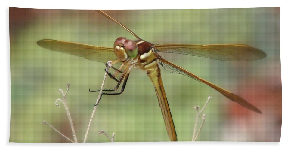 Nature Bath Sheet featuring the photograph Golden-winged Skimmer by Peg Urban