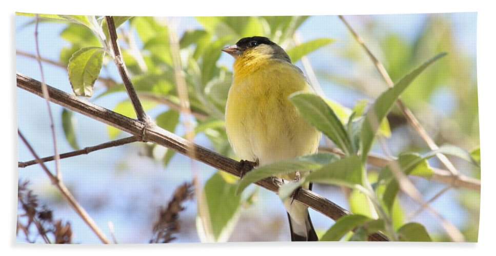 Bird Hand Towel featuring the photograph Goldfinch In Spring Tree by Carol Groenen