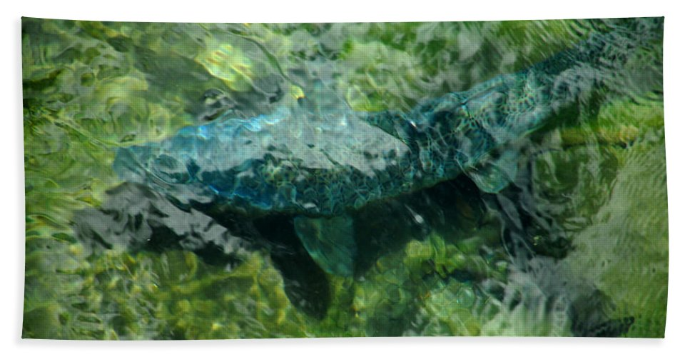 Water Bath Sheet featuring the photograph Gone Fishin by Donna Blackhall