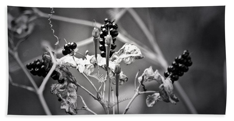 Flower Hand Towel featuring the photograph Gone To Seed Berries And Vines by Teresa Mucha