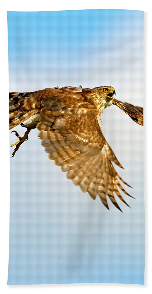 Hawk Bath Sheet featuring the photograph Good Hawk Hunting by William Jobes