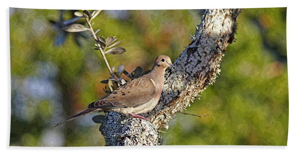 Mourning Dove Bath Sheet featuring the photograph Good Mourning Dove By H H Photography Of Florida by HH Photography of Florida