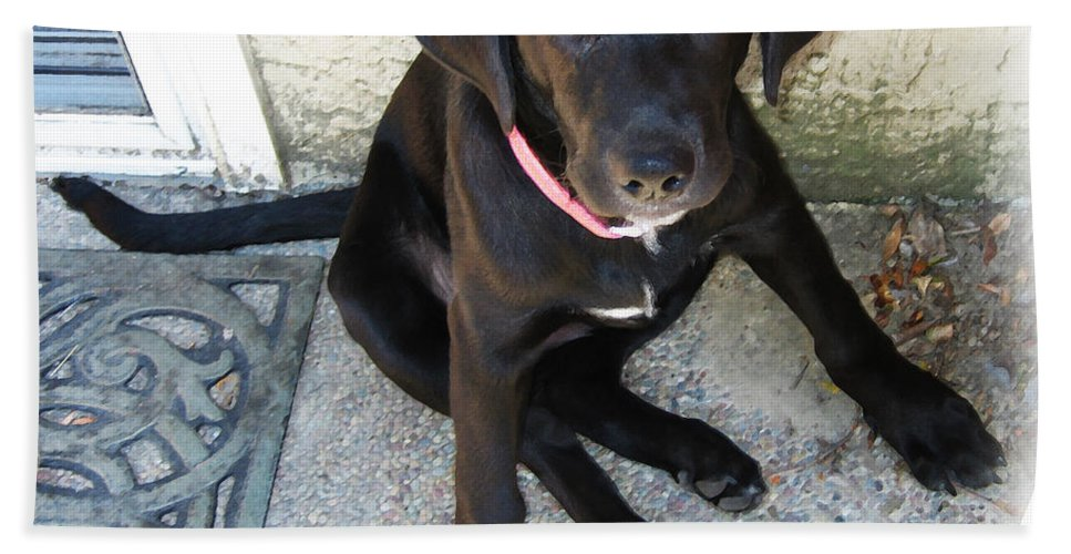 Dog Bath Sheet featuring the photograph Good Puppy by Rhonda Chase