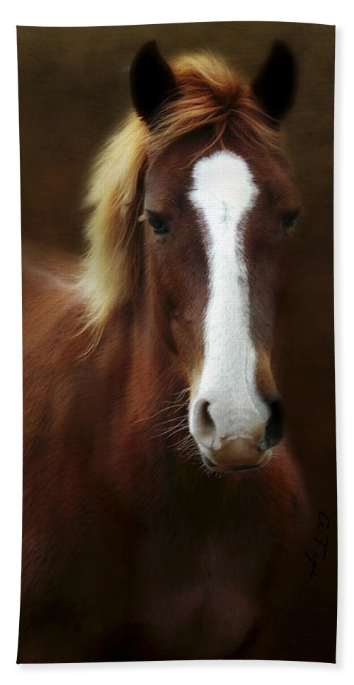 Good Stead Hand Towel featuring the photograph Good Stead by Anita Faye