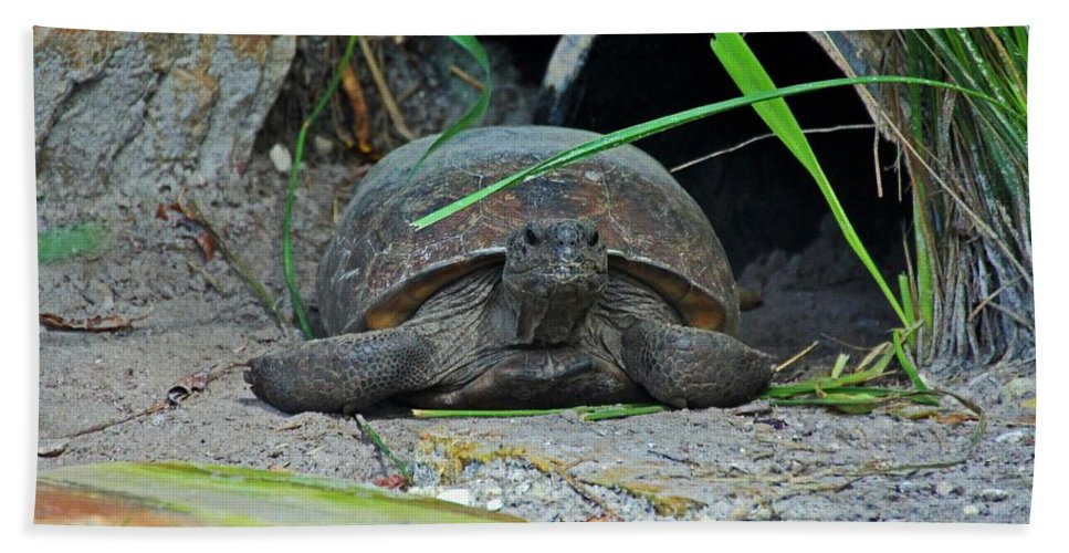 Gopher Tortoise Hand Towel featuring the photograph Gopher Tortoise II by Michiale Schneider