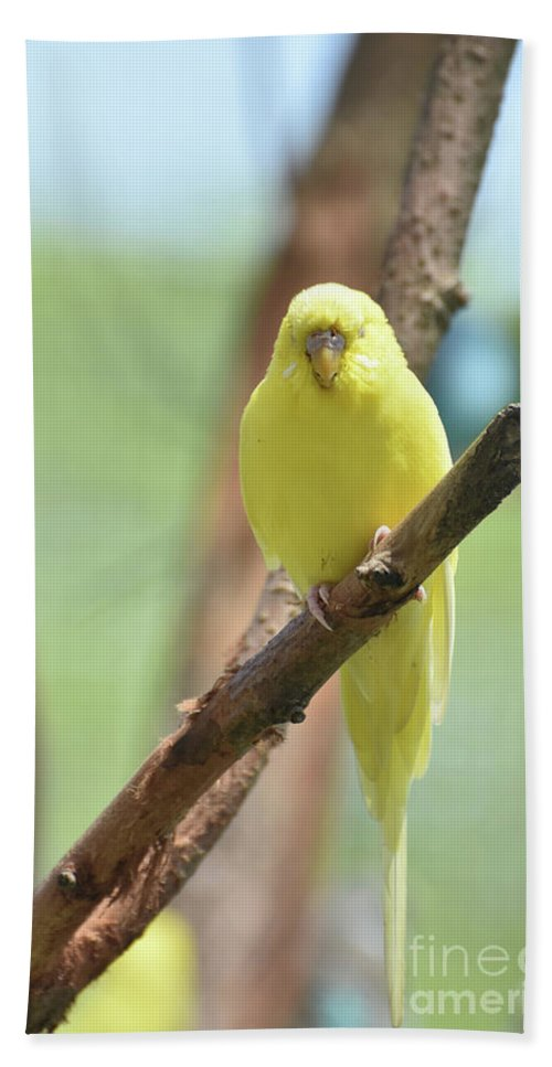 Budgie Hand Towel featuring the photograph Gorgeous Little Yellow Parakeet Living In The Wild by DejaVu Designs