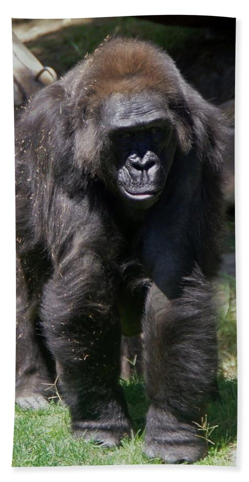 Gorilla Hand Towel featuring the photograph Gorilla 1 by Phyllis Spoor