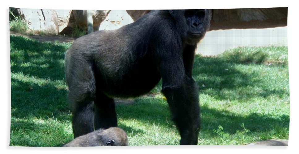 Gorillas Hand Towel featuring the photograph Gorillas Mary Joe Baby And Emonty Mother 6 by Phyllis Spoor