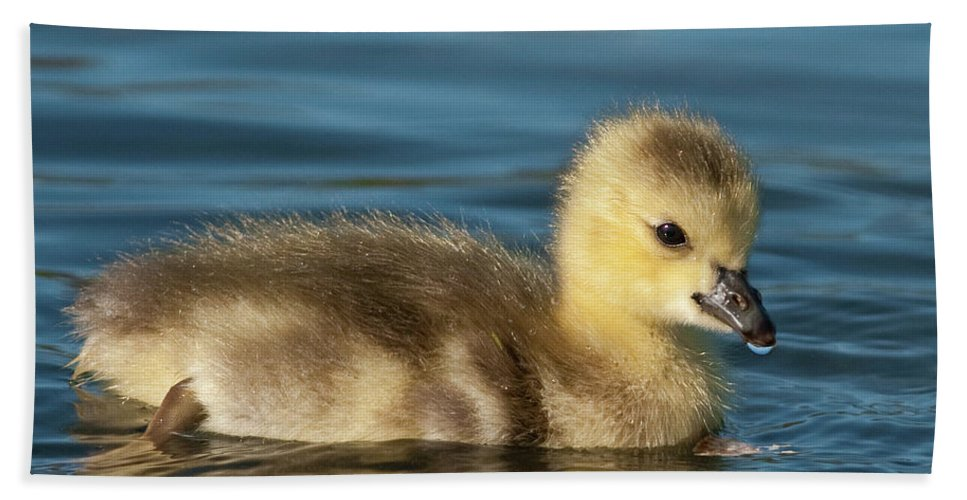 Festblues Hand Towel featuring the photograph Gosling.. by Nina Stavlund