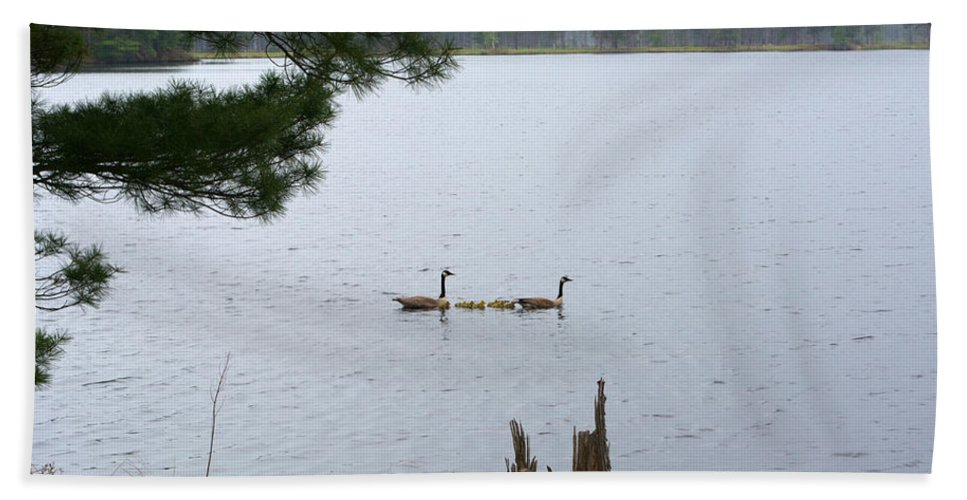 Nature Bath Sheet featuring the photograph Goslings And Geese by Linda Kerkau
