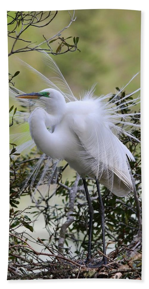 Great White Egret Hand Towel featuring the photograph Grace In Nature II by Carol Montoya