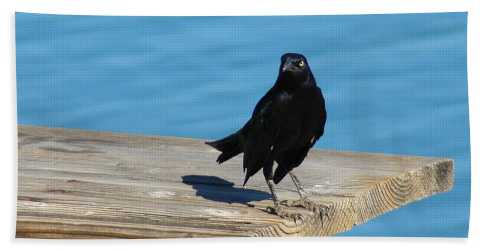 Black Hand Towel featuring the photograph Grackle by Teresa Stallings