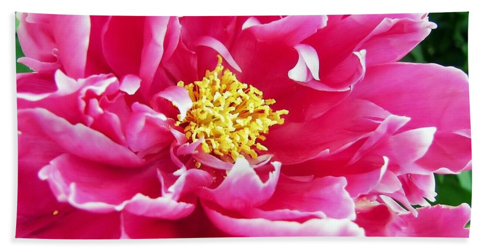 Flower Bath Sheet featuring the photograph Gram's Peony by JAMART Photography