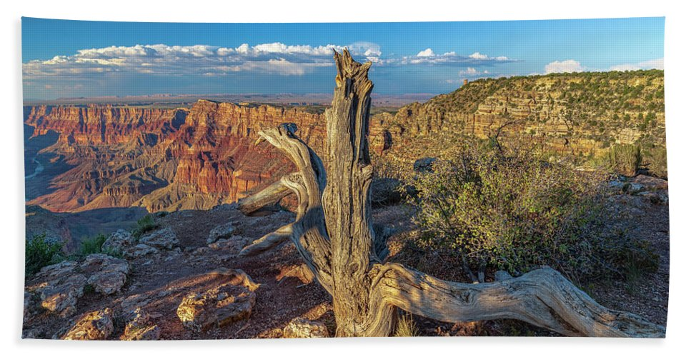 Grand Canyon Hand Towel featuring the photograph Grand Canyon Old Tree by Steven Sparks