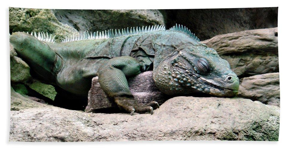 Lizard Hand Towel featuring the photograph Grand Cayman Blue Iguana by Angelina Vick