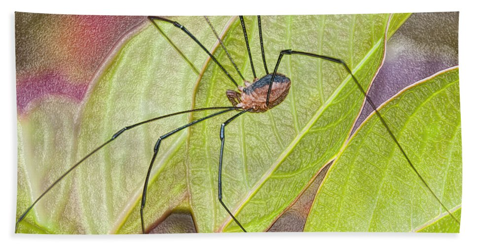 Grandaddy Hand Towel featuring the photograph Grandaddy Long Legs by Terry Anderson
