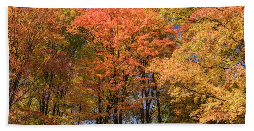 Fall Hand Towel featuring the photograph Grandma Red's Woods by Peg Runyan