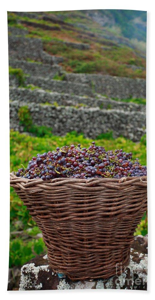 Basket Bath Towel featuring the photograph Grape Harvest by Gaspar Avila