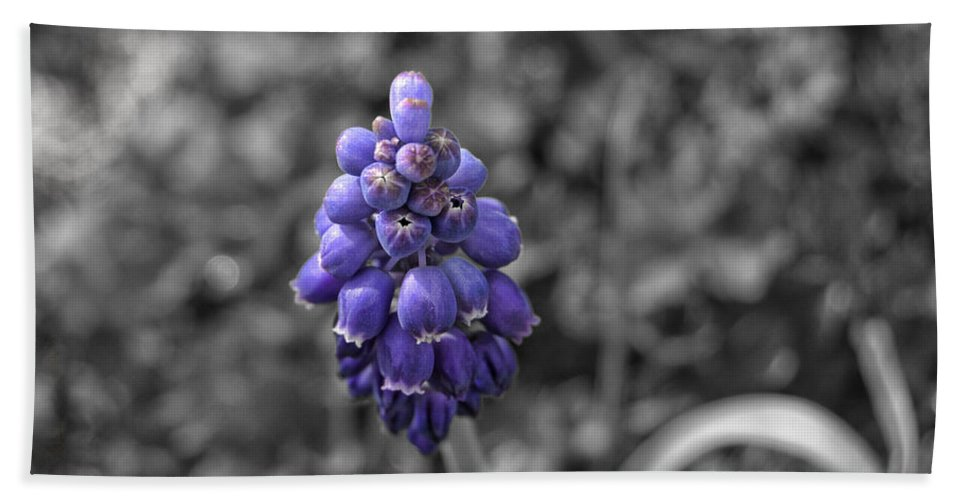 Grape Bath Sheet featuring the photograph Grape Hyacinth by Amber Flowers
