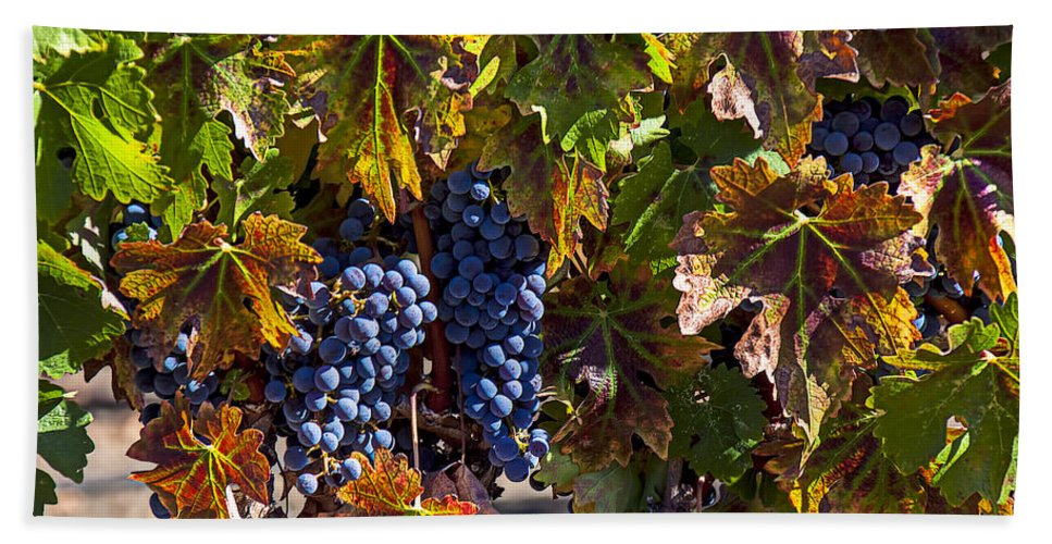 Grapes Hand Towel featuring the photograph Grapes Of The Napa Valley by Garry Gay