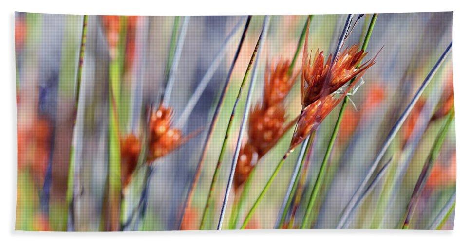 Grass Bath Sheet featuring the photograph Grass Seeds by Martin Heigan