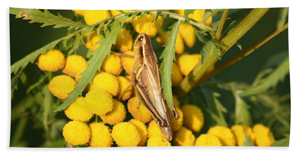Bug Grasshopper Plants Flowers Nature Yellow Wild Life Green Weed Bath Sheet featuring the photograph Grasshopper by Andrea Lawrence