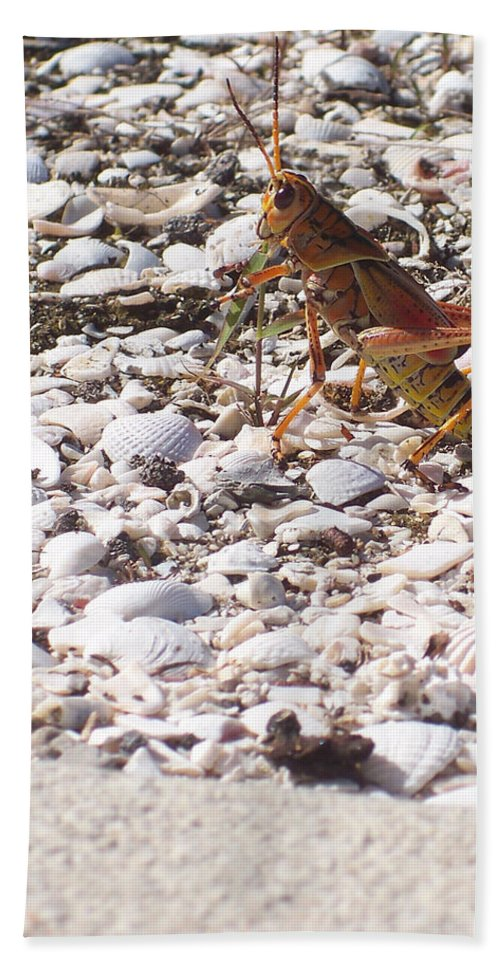 Florida Bath Sheet featuring the photograph Grasshopper by Chris Andruskiewicz