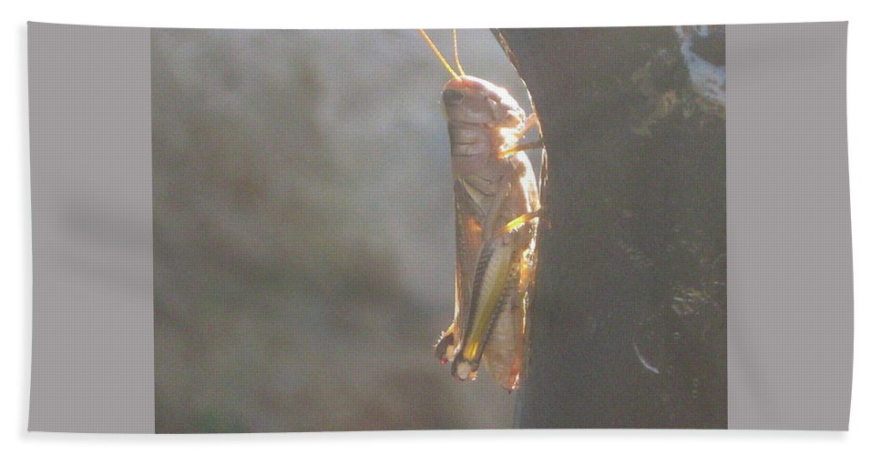 Hand Towel featuring the photograph Grasshopper by Rocky Washington