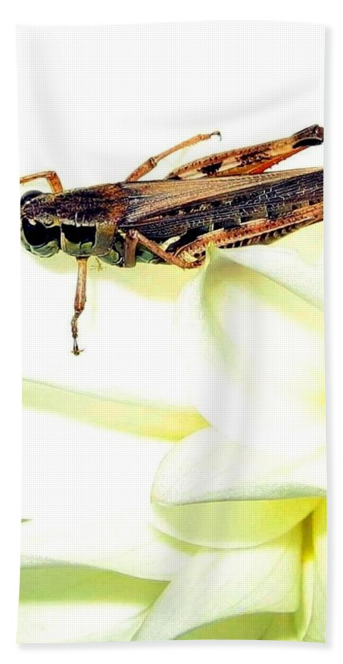 Grasshopper Hand Towel featuring the photograph Grasshopper by Will Borden
