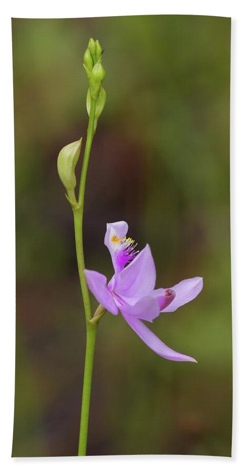 Orchid Bath Sheet featuring the photograph Grasspink #2 by Paul Rebmann
