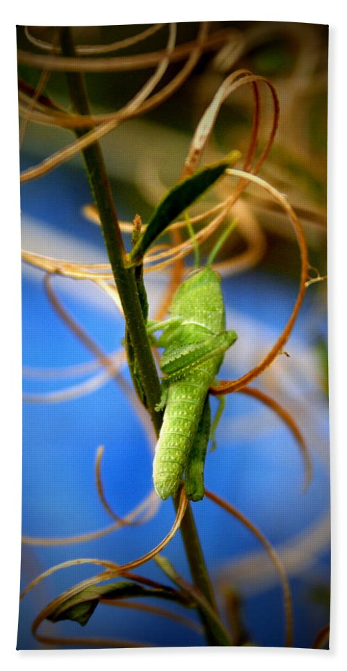 Grasshopper Bath Sheet featuring the photograph Grassy Hopper by Chris Brannen