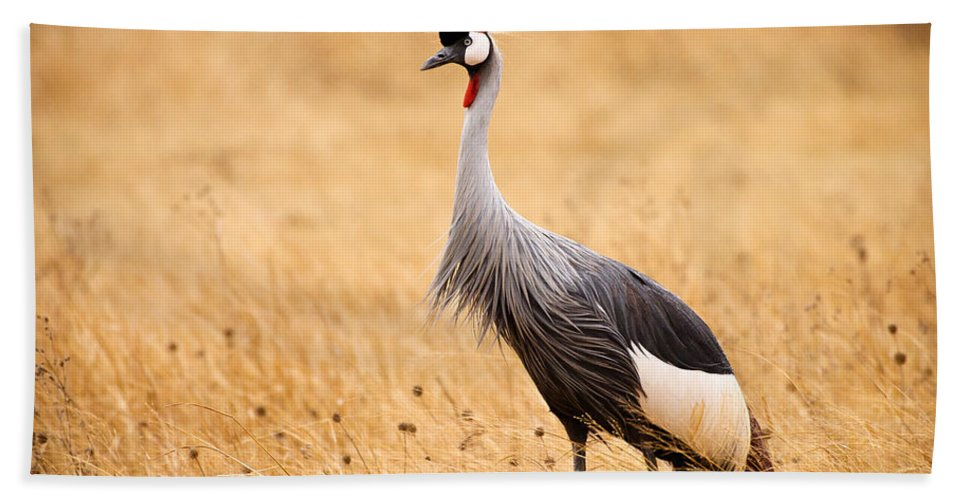 3scape Photos Bath Towel featuring the photograph Gray Crowned Crane by Adam Romanowicz