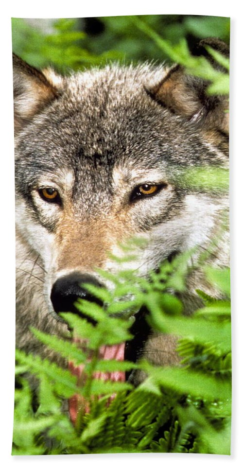 Gray Wolf Bath Sheet featuring the photograph Gray Wolf In The Woods by Larry Allan